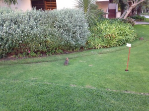 Golf Bunnies