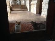 Oskar & Merlin vor der Tür des Fitnesszenters