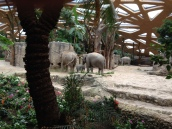 The new elephant enclosure at Zurich Zoo - look at the baby elephant, too cute!