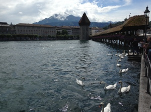 Lucerne with it's swans - very picturesque.