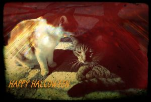 20141031_Happy-Halloween-1