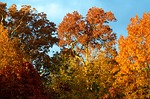 Fall foliage, what a view.