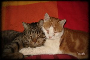 Cuddly Cats