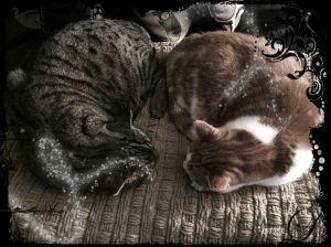 Sleepy Cats