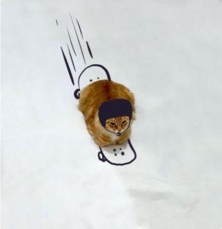 Cat-Skating