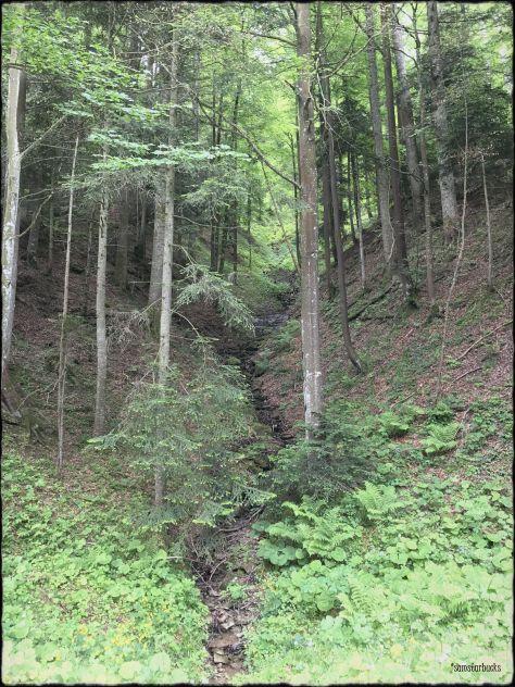 Monday-Hike_03-Deer1