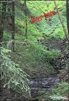 Monday-Hike_04-Deer2